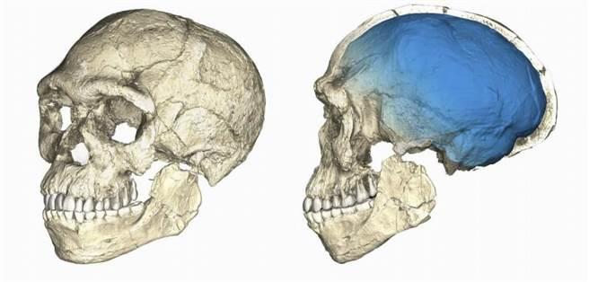 描写在摩洛哥新发现人类遗骨头颅的插画。 (美联社)
