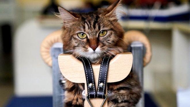 实际上,几十年前给宠物做针灸就已经出现了,但是没有被普遍使用。(图/取自路透社)