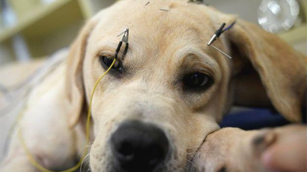 上千位宠物主人说,针灸改善了他们的宠物,尤其是当宠物年老生病的时候。(图/取自路透社)